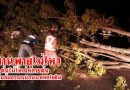 ต้นไม้ใหญ่หลายต้น ทานพายุไม่ไหวโค่นล้มขวางบนถนนพหลโยธิน